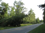 Fallen Trees on Power LInes